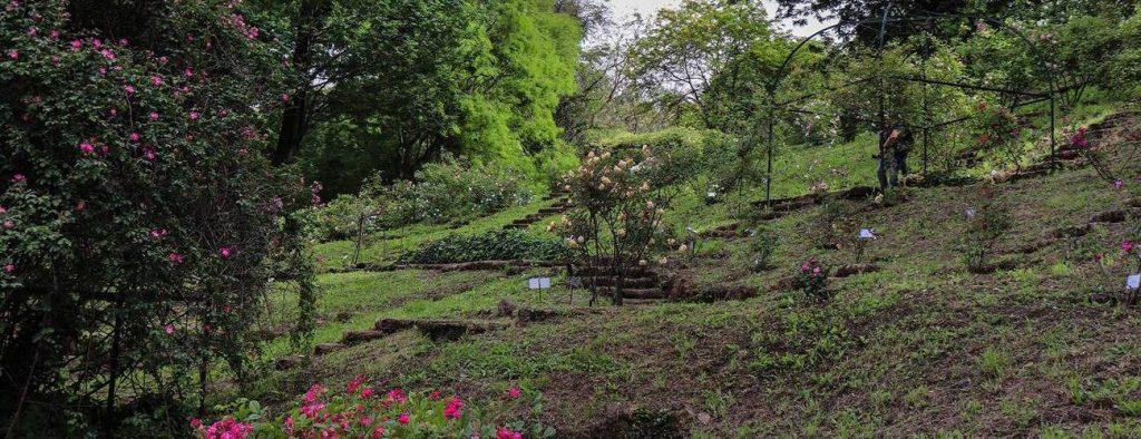 Visita all'Orto Botanico di Roma - Università Popolare Eretina